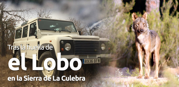 banner_index_lobo01